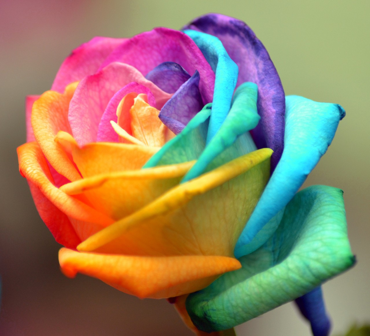 Ogród pełen róż