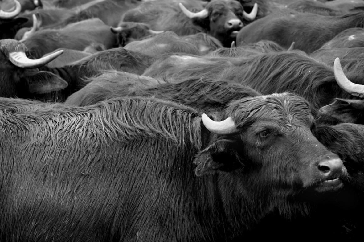Walki zwierząt