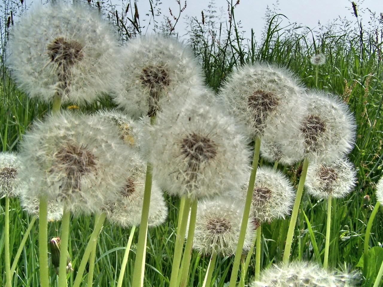 Idealne rośliny do ogrodu