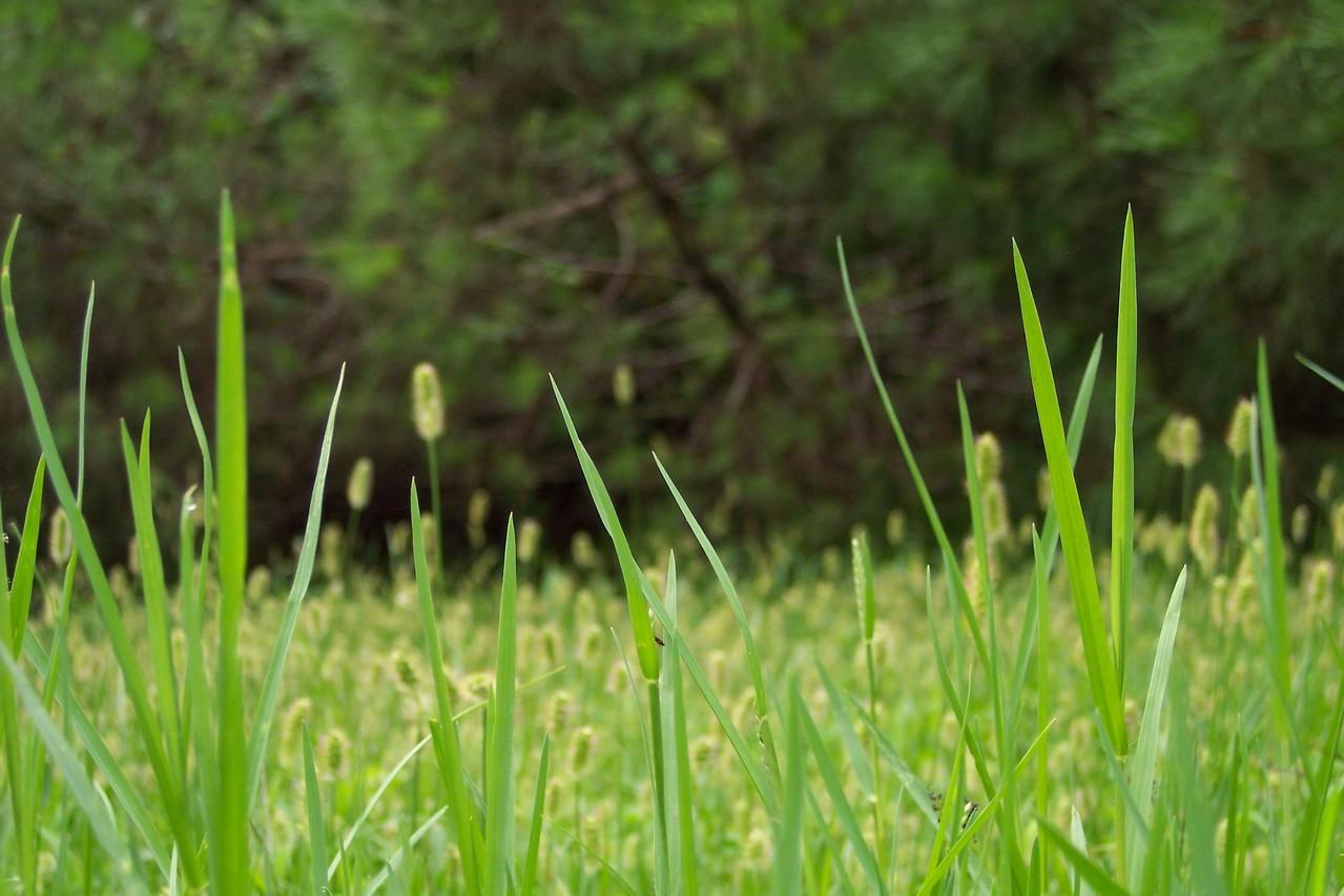 Piękna trawa w ogrodzie